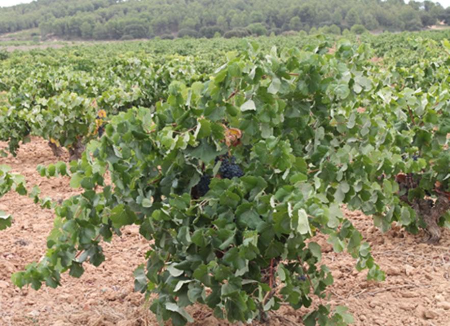 Enoturismo con Vinos y Sabores Ecológicos